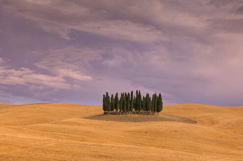 Italy, Tuscany, cypress grove in harvested wheat field - RUEF001261