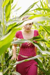 Young woman walking through a maizefield - SEF000818