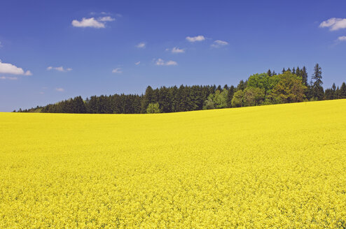 Germany, Bavaria, view to blossoming rape field - RUEF001285