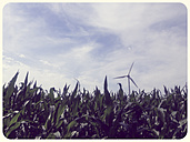 Cornfield and wind turbine - SHIF000015