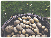 Basket with potatoes - SHI000018