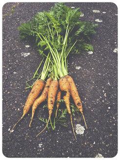 Carrots in garden - SHI000022