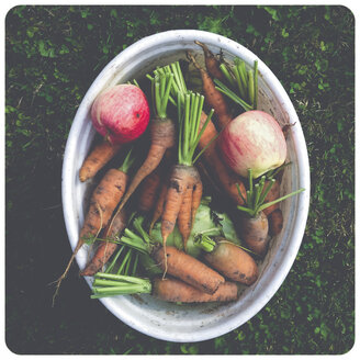 Carrots and apples in bucket - SHI000041