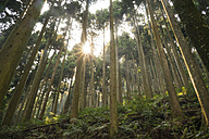 Japan, Kurama, Cedar trees - FLF000476