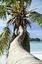 Seychelles, Palm at Praslin Island - KRPF000717