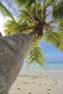 Seychelles, Palm at Praslin Island - KRPF000718