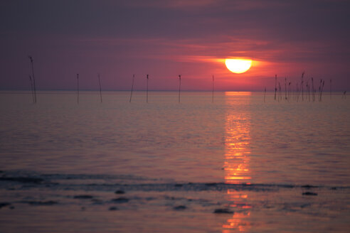 Germany, Lower Saxony, Dorum, Sunset at the wadden sea - OLE000025