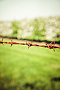 Germany, Barbed wire - KRP000935
