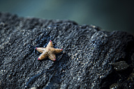 Norway, starfish on rock - NGF000138