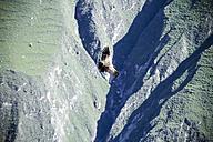 South America, Peru, Andean Condor, Vultur gryphus, flying - KRPF000808