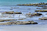 Australia, South Australia, Robe, small islands with seabirds - MIZ000554