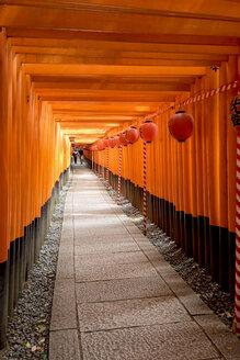 Japan, Honshu, Kyoto, Fushimi Inari-taisha, Torii japanese gates - HL000699