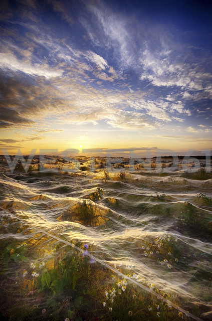 United Kingdom, Scotland, East Lothian, Plastic Netting over a field of crops against the sun - SMAF000244