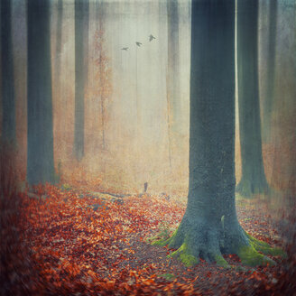 Autumn forest with red foliage covering the ground, digital alteration - DWI000151
