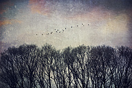 Bare treetops and a flock of flying birds - DWI000154