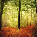 Fork path in autumn forest - DWI000156