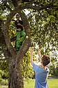 Boy throwing apple from a tree - PAF000882