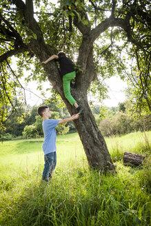 Boy helping his friend to climb down a tree - PAF000858
