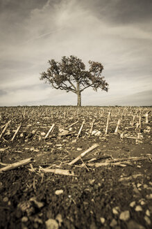 Germany, Baden-Wuerttemberg, harvested field and tree - MIDF000006