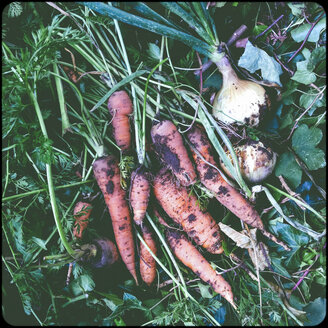 Onions and carrots - SHIF000070