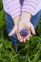Hands of a little girl holding a plum - LVF001782