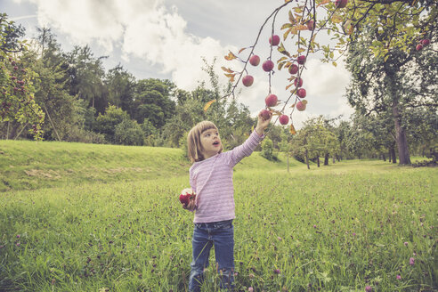 Little picking apples from a tree - LVF001784