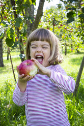 Portrait of little girl eating an apple on a meadow with scattered fruits - LVF001787