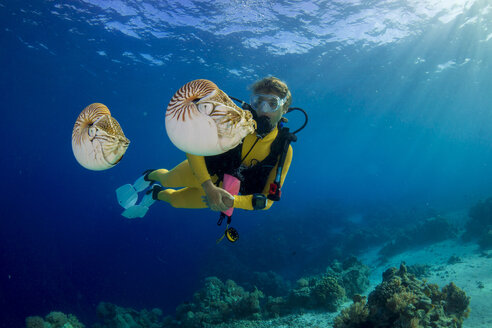 Oceania, Palau, Diver watching Palau nautilusses, Nautilus belauensis, in Pacific Ocean - JWAF000206