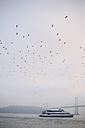 USA, California, San Francisco, seagulls and ferry at Oakland Bay Bridge - BR000727