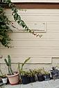 USA, California, San Francisco, flower pots at house wall at slope - BRF000732