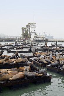 USA, California, San Francisco, sea lions in harbor at Pier 39 - BRF000745