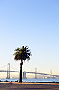 USA, California, San Francisco, Oakland Bay Bridge and palm tree on Treasure Island in morning sun - BRF000682