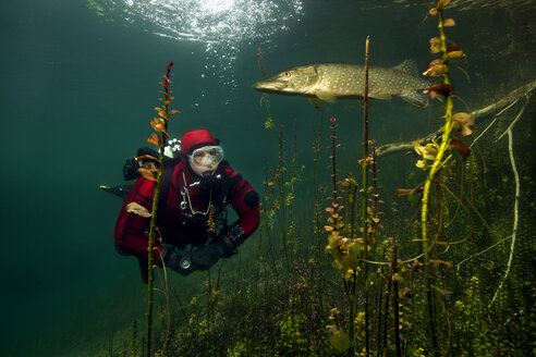 Germany, Bavaria, lake Echinger Weiher, diver and pike - YRF000063