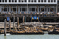 USA, California, San Francisco, Sea lions at Pier 39 - FO007039