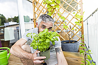 Man hiding behind flowerpot with basil on his balcony - MBEF001106