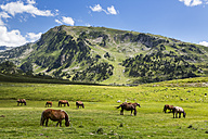 Spain, Catalonia, Pyrenees, Horses grazing at Pla de Beret - STSF000496