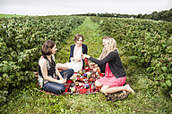 Group of female friends having a picnic between raspberry bushes - DISF001025