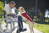 Man in wheelchair with dog in park - ZEF000387