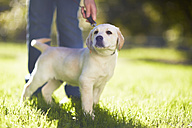 Woman with dog on a meadow - ZEF000853