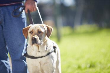 Portrait of guide dog - ZEF000988