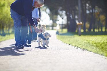 Puppy at dog training - ZEF000989