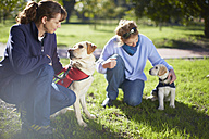 Two guide dogs at dog training - ZEF000994
