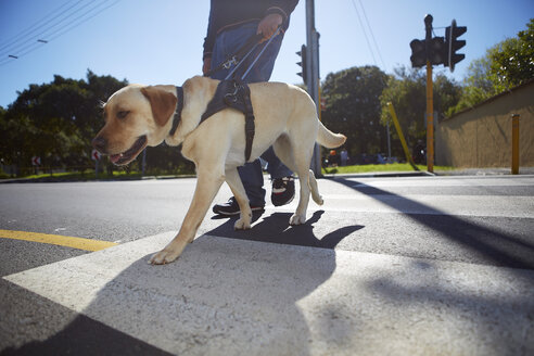 Visually impaired man crossing a street with his guide dog - ZEF001001