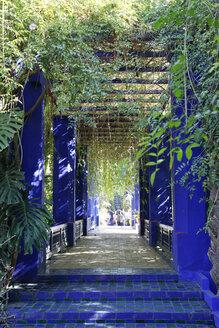 Morocco, Marrakesh, Majorelle Garden - RIM000294