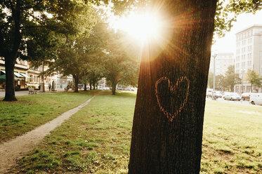 Germany, Berlin, heart painted on tree trunk - ZMF000379