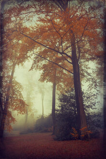 View to foggy autumn forest - DWI000208