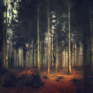 Glade of a forest at sunlight - DWI000204