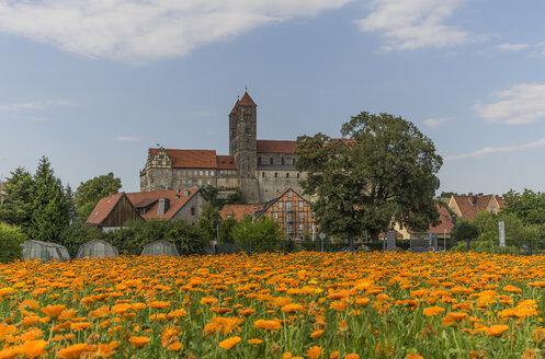 Germany, Saxony-Anhalt, Quedlinburg, Quedlinburg Abbey, St. Servatius church, Garden with flowers - PVCF000107