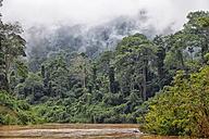 Malaysia, Pahang, Taman Negara National Park, jungle at Sungai Tembeling - DSGF000293