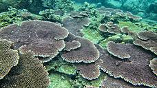 Malaysia, South China Sea, Tioman Island, Coral reef - DSGF000802